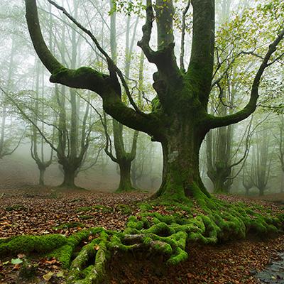 Foto En la niebla de Pedro Martinez